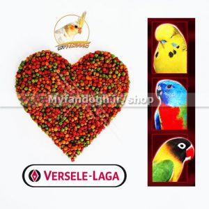 پلت میوه ای طوطی سانان کوچک و متوسط جثه ورسلاگا سایز ریز