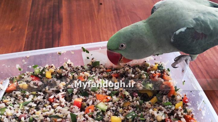 مزایای کینوا برای طوطی ها